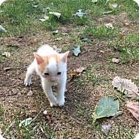 Adopt A Pet :: Spot - Monroe, NJ