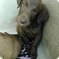 Adopt A Pet :: RUTHY - San Antonio, TX