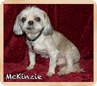 Shih Tzu Dog for adoption in Orlando, Florida - McKinzie