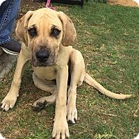Adopt A Pet :: Annie - Killeen, TX