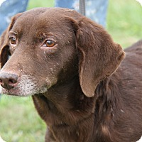 Adopt A Pet :: Bear (Neutered) - Marietta, OH