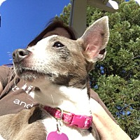 Adopt A Pet :: Bunny - Vacaville, CA