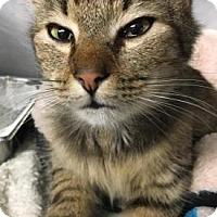 Adopt A Pet :: Stanley-PetValu Marlton - Voorhees, NJ