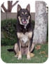 Adopt A Pet :: BuBu AKA Romeo - Marina del Rey, CA
