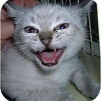 Adopt A Pet :: Grace - Jacksonville, FL