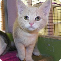 Adopt A Pet :: BoBo - Dover, OH