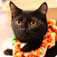 Adopt A Pet :: Binx - Sacramento, CA