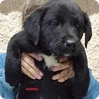 Adopt A Pet :: Gabriel - Wimberley, TX