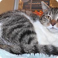 Adopt A Pet :: Alana - Chattanooga, TN