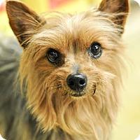 Adopt A Pet :: Christopher - Gainesville, FL
