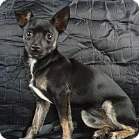 Adopt A Pet :: Rosie - Charlestown, RI