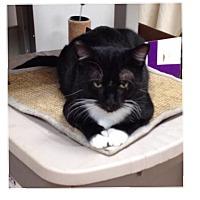 Adopt A Pet :: Benny - Acushnet, MA