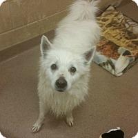 Adopt A Pet :: 1-8 - Triadelphia, WV