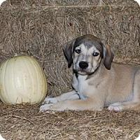 Adopt A Pet :: Wolfie Dupre - Baton Rouge, LA