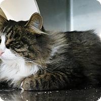 Adopt A Pet :: Naomi - Geneseo, IL