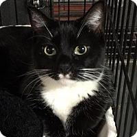 Adopt A Pet :: Winnie - Brooklyn, NY