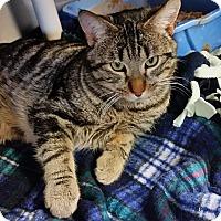 Adopt A Pet :: Governor - Chippewa Falls, WI