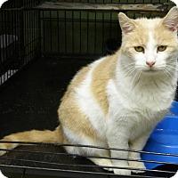 Adopt A Pet :: Thelma - Marlinton, WV