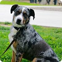 Adopt A Pet :: Melanie - Palo Alto, CA