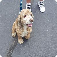 Adopt A Pet :: Poochy - Ogden, UT