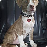 Adopt A Pet :: Zack - Bellingham, WA