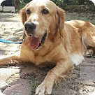 Adopt A Pet :: Theia