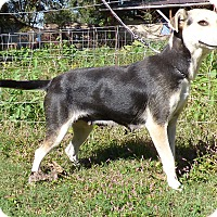 Adopt A Pet :: Trinket - Hartford, CT