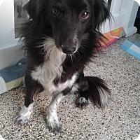 Adopt A Pet :: Samy - Thousand Oaks, CA