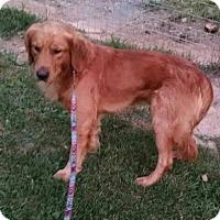 Adopt A Pet :: SPORT - WOODSFIELD, OH