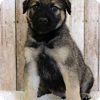 Adopt A Pet :: Chamber - Waldorf, MD