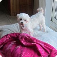 Adopt A Pet :: Adele 3421 - Toronto, ON