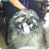 Adopt A Pet :: PACHE - Southern California, CA