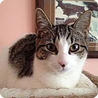 Adopt A Pet :: Divo - East Hanover, NJ