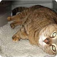 Adopt A Pet :: Pooky (Suzi-Q) - Mission, BC