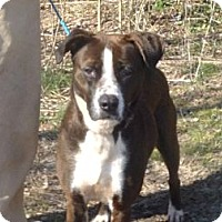 Adopt A Pet :: # 571-12  RESCUED! - Zanesville, OH