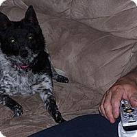 Adopt A Pet :: Ella - Chewelah, WA