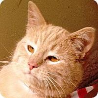 Adopt A Pet :: Alf - western, MN