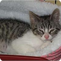 Adopt A Pet :: Iffie - Port Republic, MD