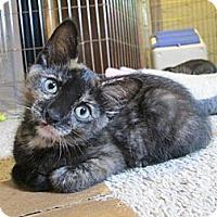 Adopt A Pet :: Annie - Richland, MI