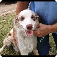 Adopt A Pet :: Ellie May - Conway, AR