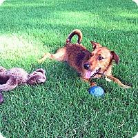 Adopt A Pet :: Eddie - Homewood, AL