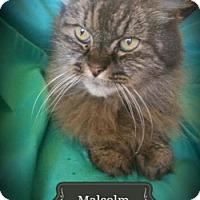 Adopt A Pet :: Malcolm - Davis, CA