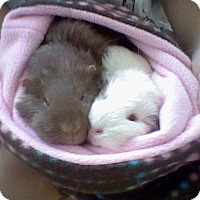 Adopt A Pet :: Snowy and Mochi - Fullerton, CA