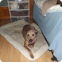 Adopt A Pet :: Hank - Quincy, IN