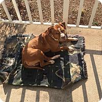 Adopt A Pet :: Harvey - Bridgewater, NJ