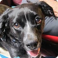 Adopt A Pet :: Snoopy-Kit - El Paso, TX