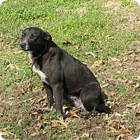 Adopt A Pet :: Lulu - Oakland, AR