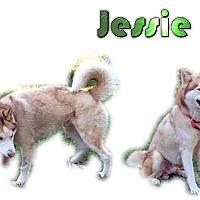 Adopt A Pet :: Jessie II - Seminole, FL