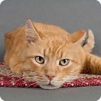 Adopt A Pet :: Rusty - Wilmington, DE