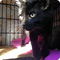 Adopt A Pet :: John Ralphio - Fort Collins, CO